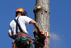 tree removal denton tx
