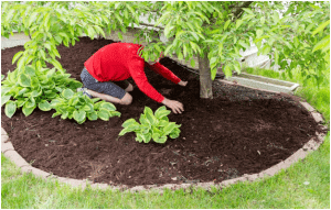 Benefits of Mulching Around Trees