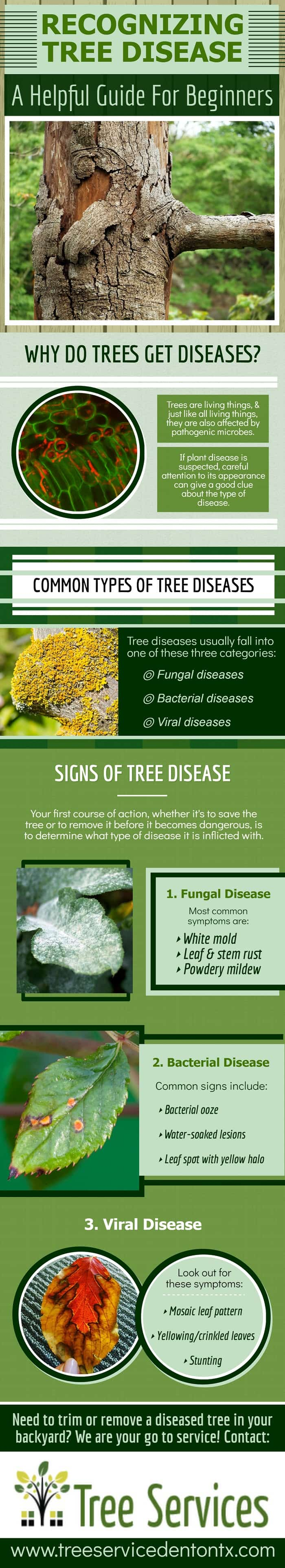 Recognizing Tree Disease - A Helpful Guide for Beginners