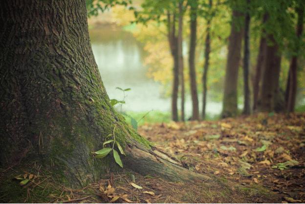 tree-services-denton