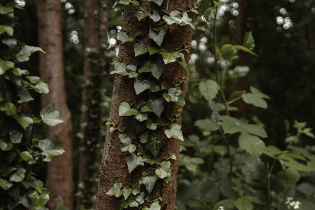 Green leaves on a tree trunk