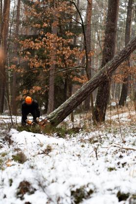 Professional tree removal service in progress